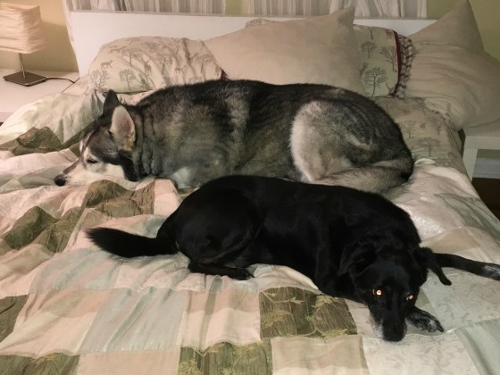 April 25 Roxbury CT Switch and Rica trying to make me sleep on the floor