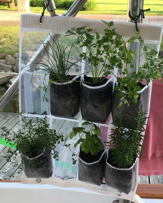 June 18 Herb garden planted but needs two more plants!