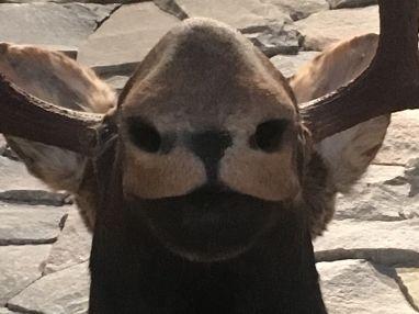 A weird creature at Killarney Mountain Lodge