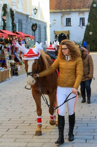 Definitely a reindeer