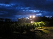 We harvest the grapes at the coolest time of the day from 4.30am.