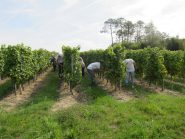 We employed 6 local seasonal workers for a week to check all rows.