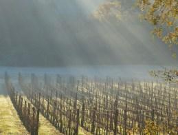 11 hectares of Sauvignon Blanc to prune..
