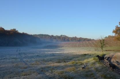Morning sun, morning frost.