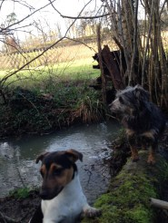 Margaux and Pavie in the stream below the vines.
