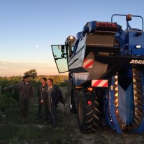2015-Bauduc-start-of-red-harvest-08