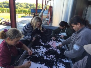 2015-Bauduc-start-of-red-harvest-13