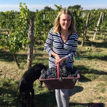 2015-Bauduc-start-of-red-harvest-18