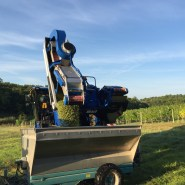2015-Bauduc-white-harvest-18