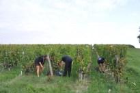 Trois-Hectares-2011-006