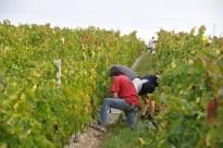 Trois-Hectares-2011-020