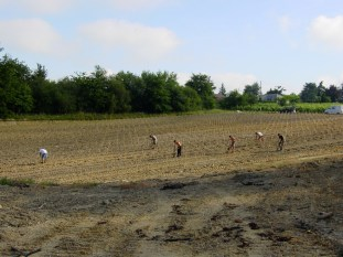 Planting the vineyard in 2004. Same year that Facebook was founded,
