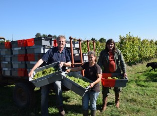 Our 15th harvest together, Gavin, Nelly… and Daniel Ramone.