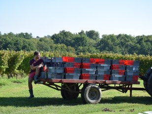 Hugo B was our harvest trainee in 2014