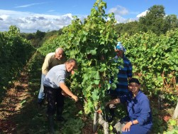 Bauduc 2016 harvest - hand picked white. Our team who work in the vines throughout the growing season: Aly, Sandra, Najia and Jhislaine.