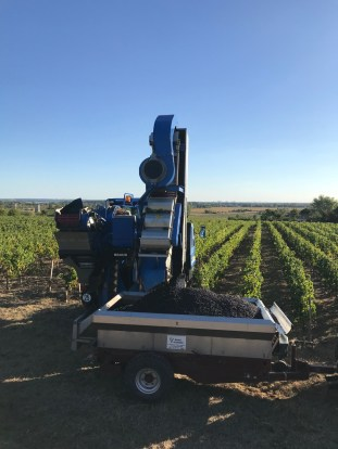 Machine harvest in the Côtes