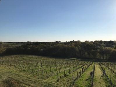 Tying the viAttachage - tying the vinesnes