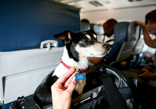 Travel With Pet By Plane