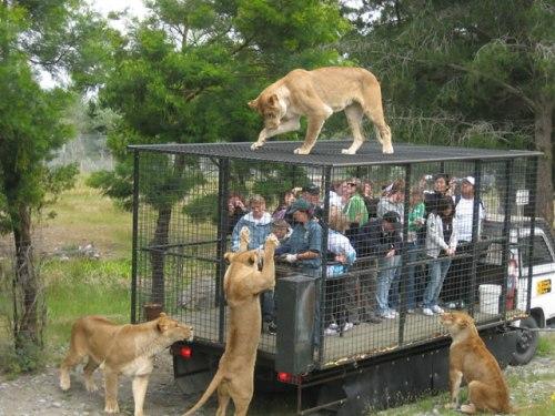 Wildlife Travel: Orana Wildlife Park, New Zealand