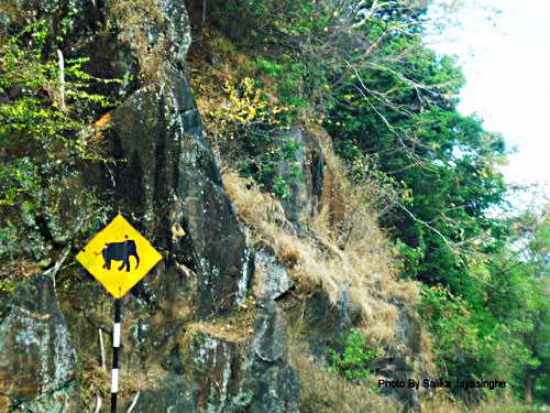 Elephant Crossing Road Sign