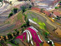 amazing places Rice Field Terrace