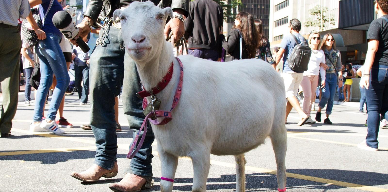 Os bichos bichas ou os animais viados que não são veados da #ParadaSP 🌈