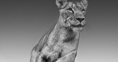 Fotógrafo A partir de 19 de agosto, as incríveis fotos preto e branco do escocês – que é um fenômeno nas artes e nos negócios – serão exibidas na Gabriel Wickbold Gallery