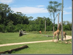 Australia Zoo african savannah (3)