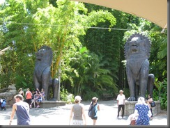 Australia Zoo chinese dragon 116 (1)