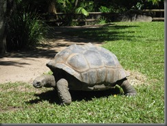 Australia Zoo  turtle 068 (3)