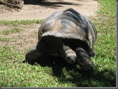 Australia Zoo  turtle 068 (4)