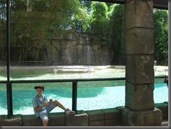 Australia Zoocat enclosure pool  122