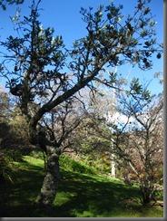 everglades house and garden blue mountains (16)