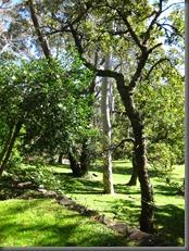 everglades house and garden blue mountains (20)