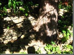 everglades house and garden blue mountains (30)