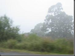 Picton NSW (5)