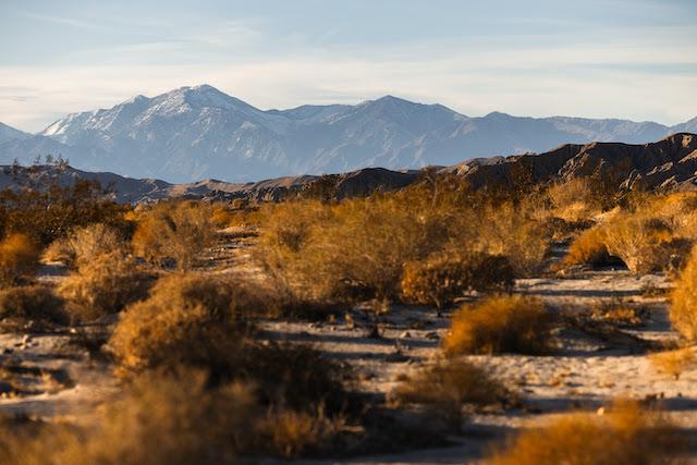 Desert X Announcement