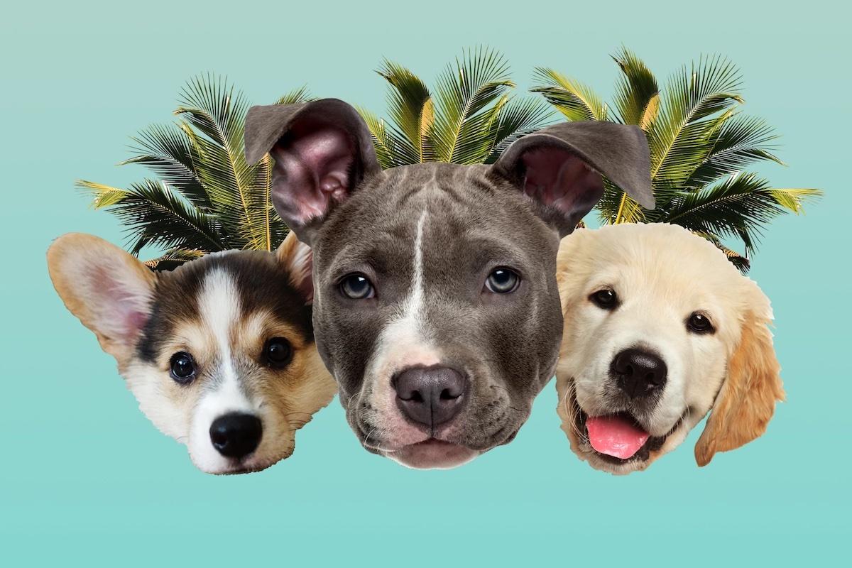3 Dogs copy