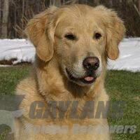 View Gaylan's Firefly's Golden Glo CDX MH WCX CCA VC OD CGC TDI (Therapy Dog)