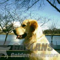 View Gaylan's USMA Golden Vision
