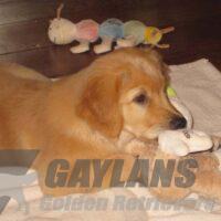 View Gaylan's Magic Star