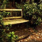 bench-overgrown