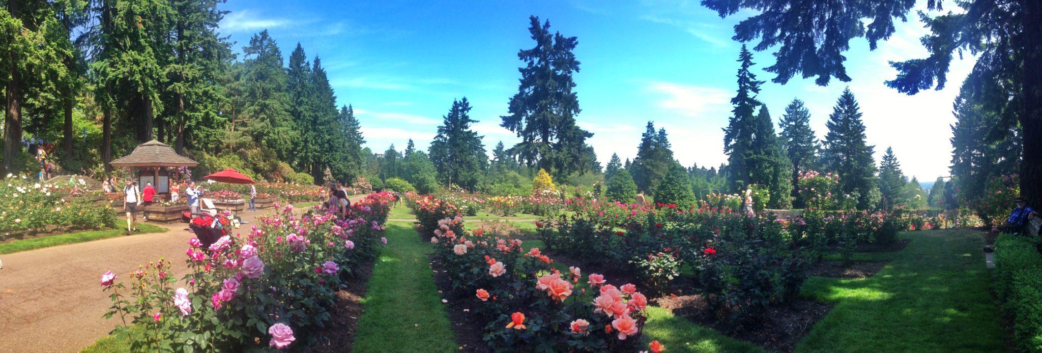 International Rose Test Garden, Washington Park, Portland, Oregon