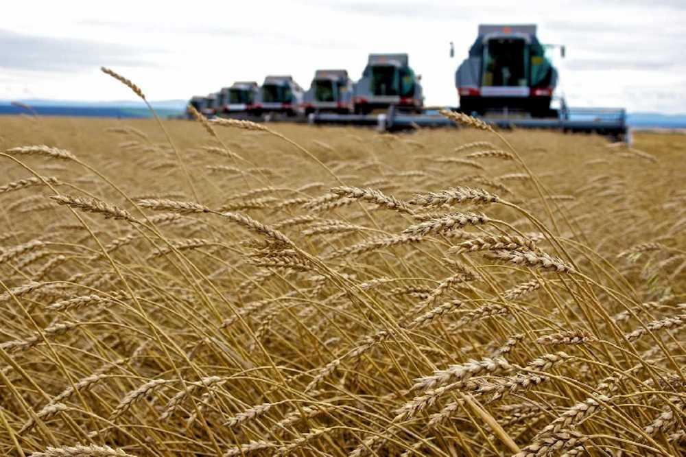 Уборка-2019. Аграрии Алтайского края намолотили 3 млн тонн зерна
