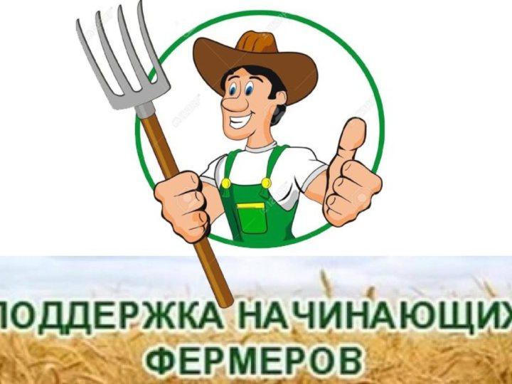 Поддержка начинающим фермерам