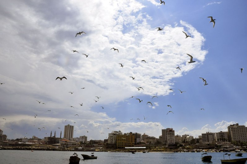 Gaza seaport with birds 1