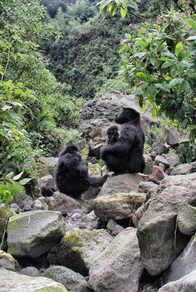 Ruanda- Vadim Karayusuf