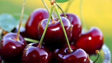 Роскачество рассказало об овощах и фруктах-убийцах