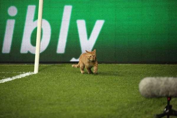 unnamed-file-6-1024x683 Macja ndalon për disa minuta ndeshjen e Ligës së Kampionëve (FOTO)