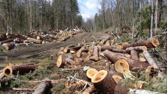 vela-trimite-corpul-de-control-la-suceava,-dupa-atacul-activistului-de-mediu-de-indivizi-din-mafia-lemnului